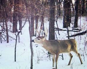 Study shows widespread novikonotinoid exposure in Minnesota white-tailed deer – Twin Cities