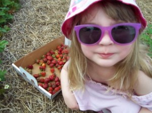 strawberry picking kid