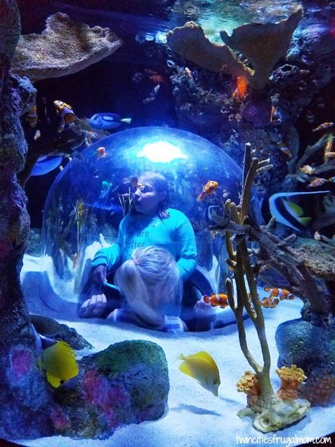 Sea Life Mall of America window