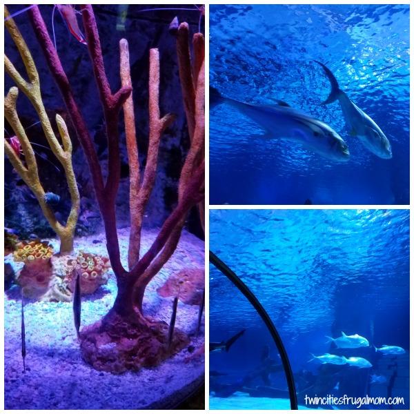 Sea Life Aquarium Mall of America