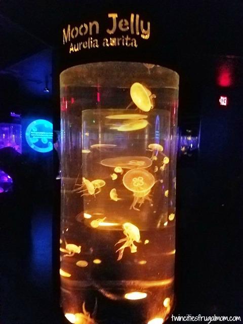 Sea Life Mall of America Jellyfish