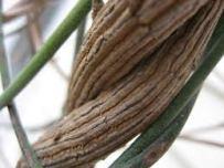 twining-vines-2