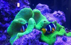 Varkala Aquarium
