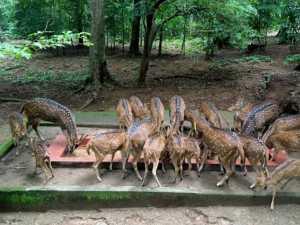 thenmala deer park