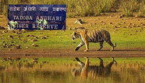Tadoba National Park, Maharashtra