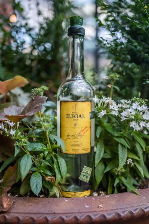 Arte Agave NYC in 2021: Best Tequila and Mezcal Tasting