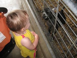 Zoo Goats