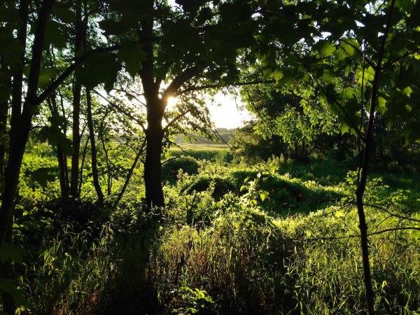 The Sun Through The Trees