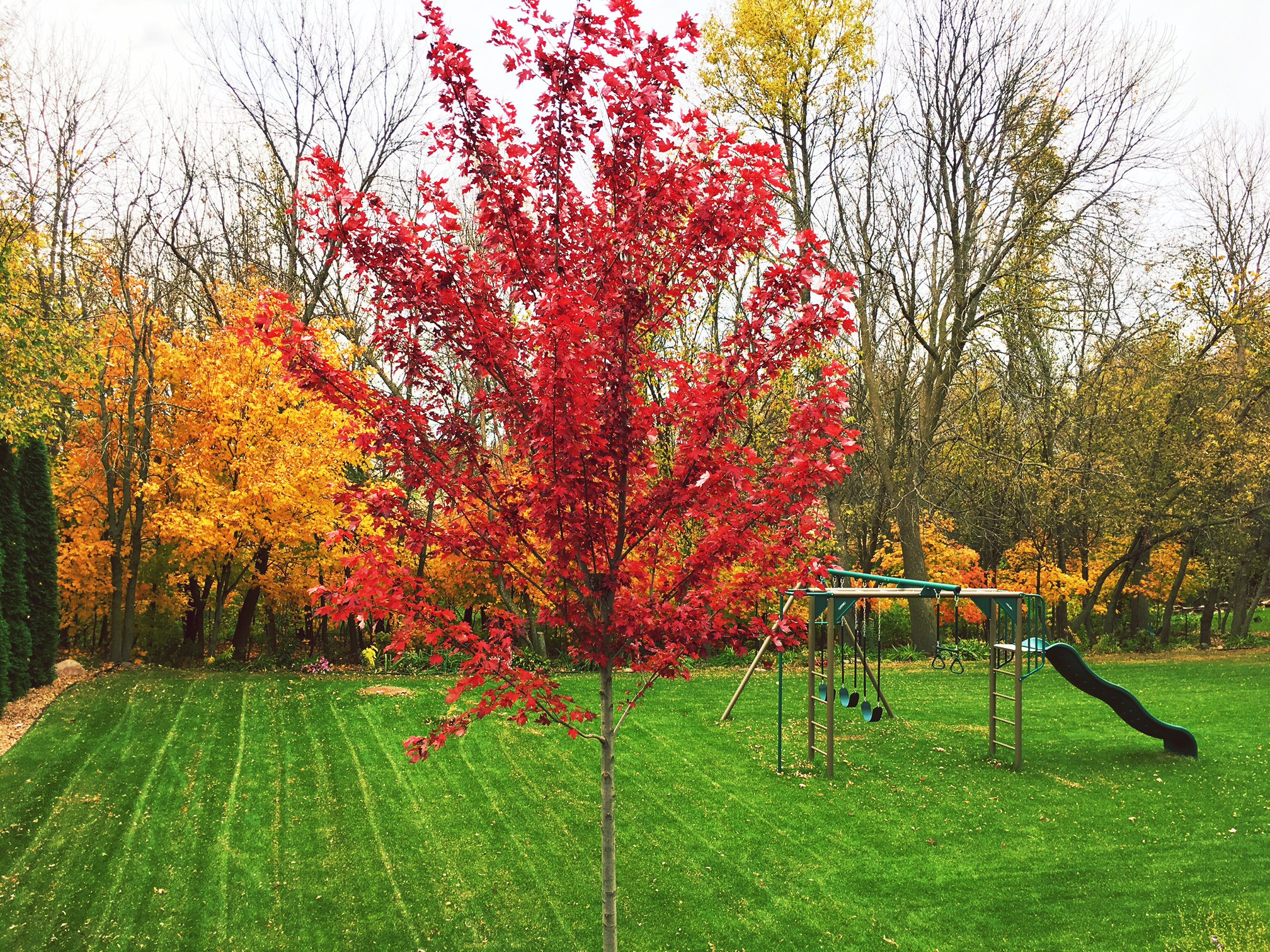 love the colors in our backyard in the fall