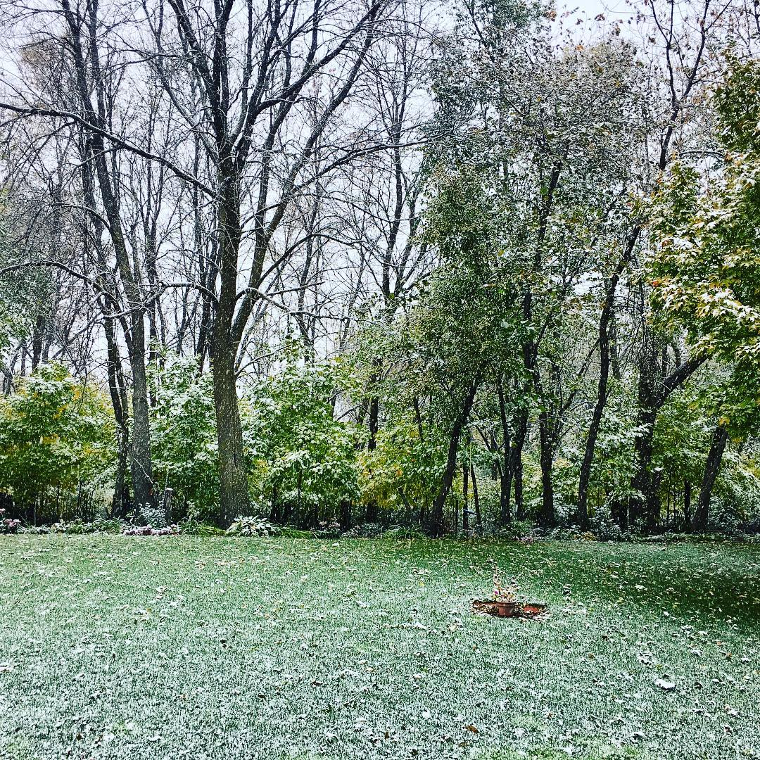 Snow on trees with leaves