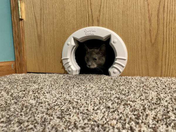 Cat in Cat Door