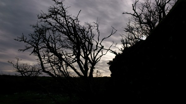 Shadow Trees Welstor