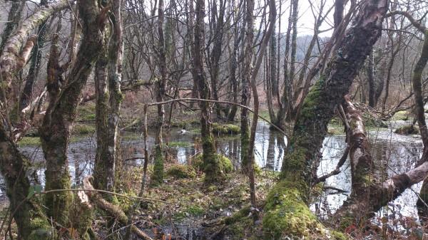Deeper Marsh Trees