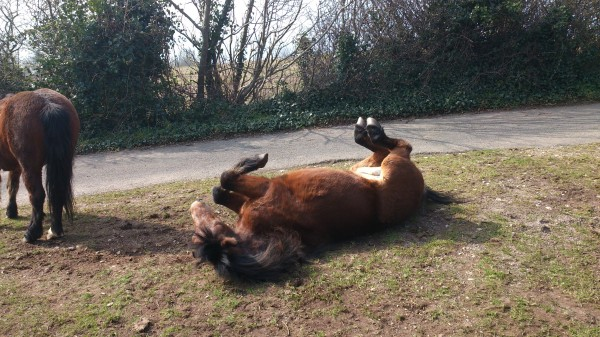 Froward Pony Rolling