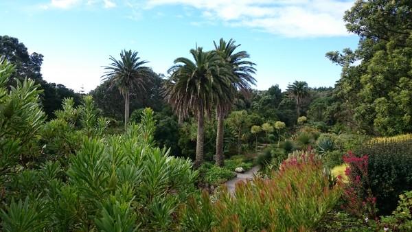 scilly-tresco-garden-colour