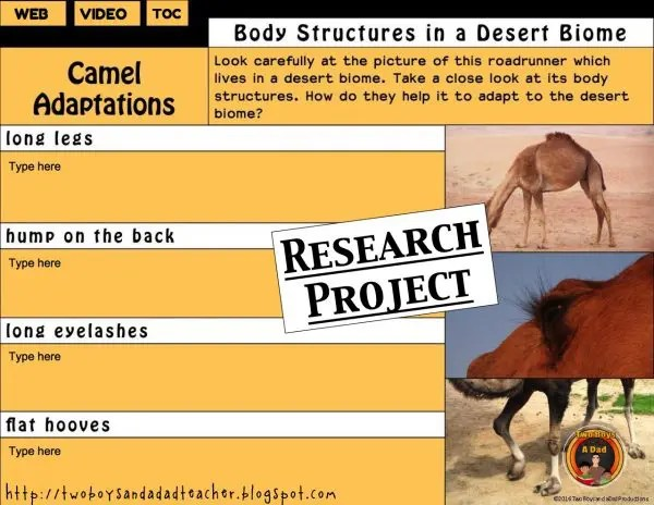 desert animals adaptations research project