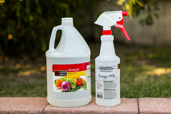 How To Keep Weeds From Growing In Pavers Get Rid Of