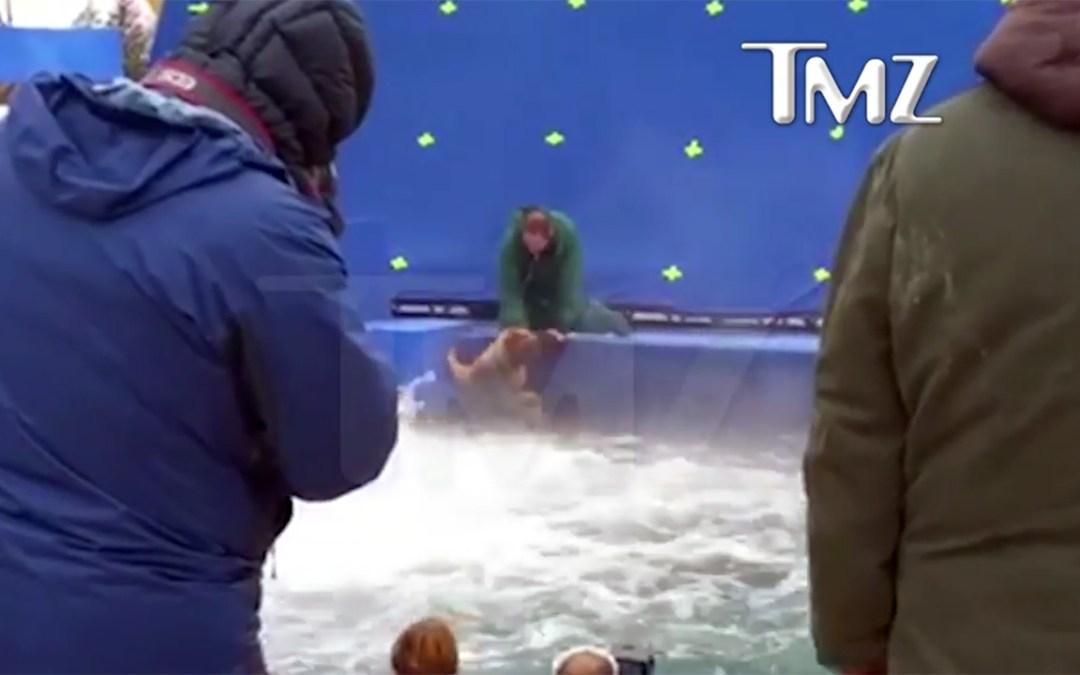 'A Dog's Purpose' Is To Be A Dog, Not A God Damn Hollywood Stunt Double