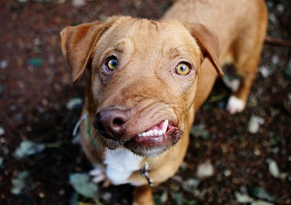 Meet Picasso: The Pup Once On Death Row Now Taking The Internet By Storm