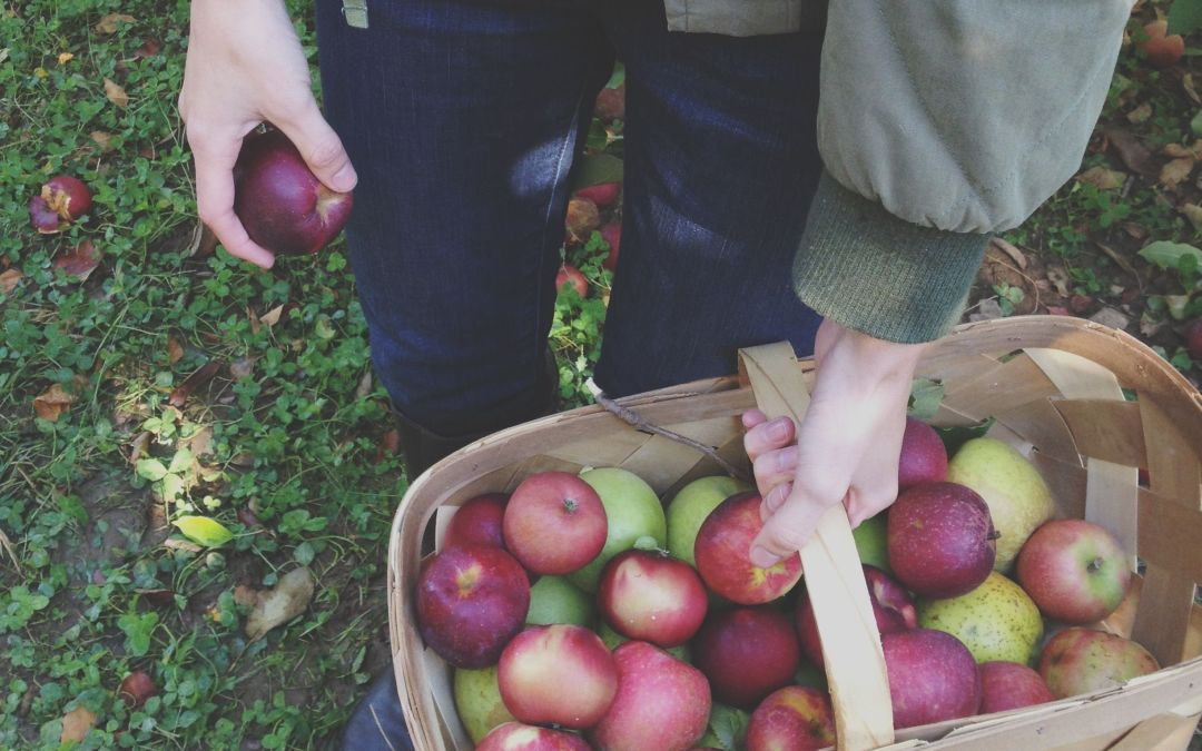 Will You Pay a Cover Charge for Apple Picking This Season?