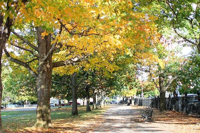 trees in park blog