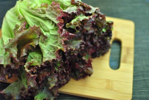 Indoor Salad Gardens Red Leaf Lettuce on Wooden Cutting Board