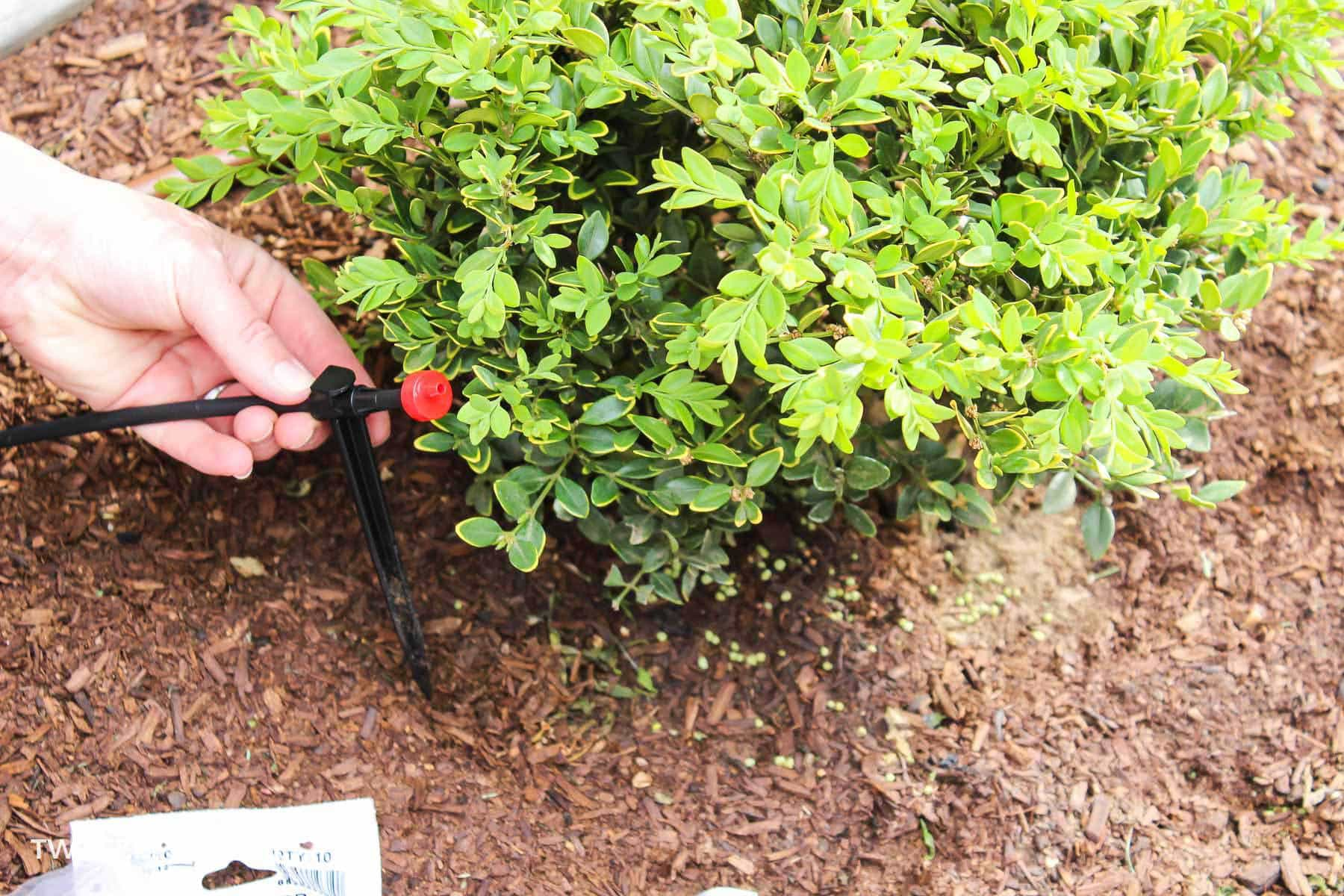 install drippers for drip irrigation system