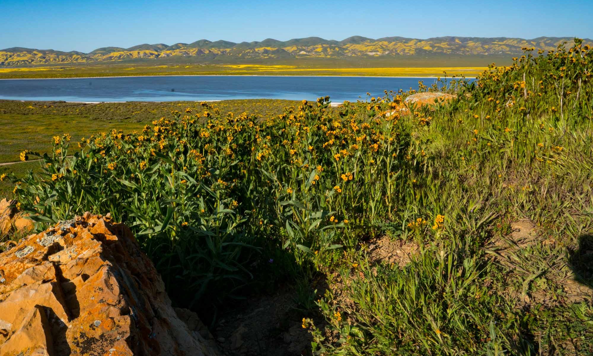 Carrizo Plain National Monument Superbloom