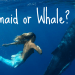 Are You A Mermaid or aWhale