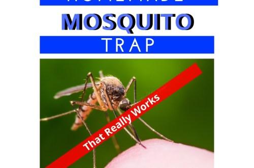 Homemade Mosquito Trap