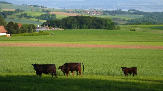Marchissy - Vaud - Suisse