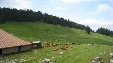 L'Arzière - Vaud - Suisse