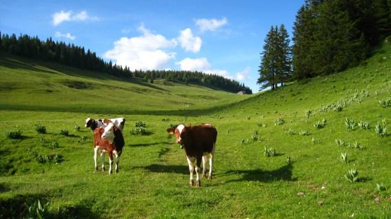 Les Begnignes - Vaud - Suisse