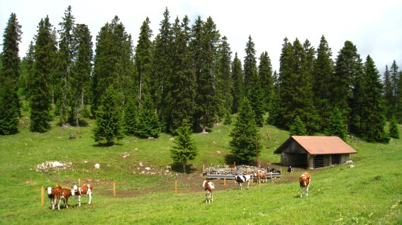Couvert de la Foirausaz - Bière - Vaud - Suisse