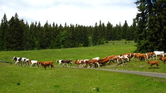 Non loin du Pré de St Livres - Vaud - Suisse