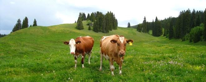Ranch de la Pierre à Lièvre