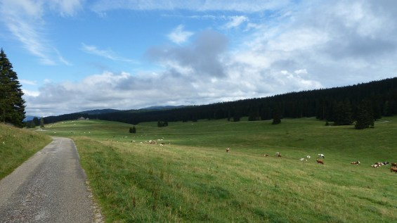 Les Grands Plats de Bise - Vaud - Suisse