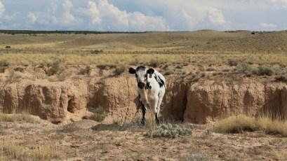 Wedge Overlook - Utah