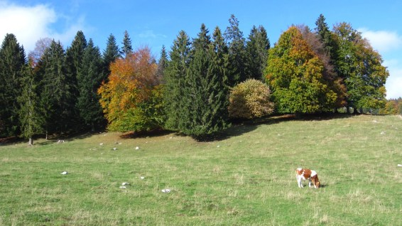 Les Agozats - Vaud - Suisse