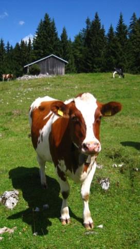 Lande Dessus - Vaud - Suisse