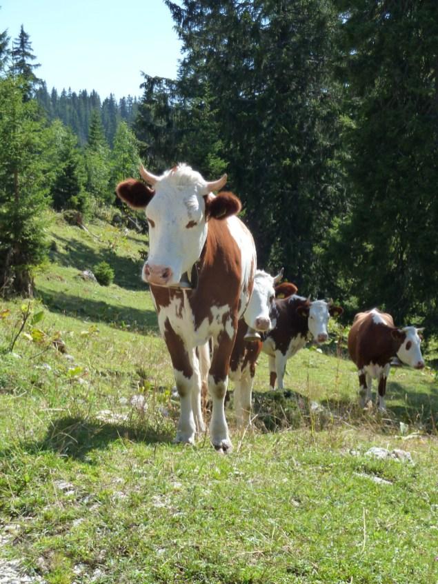 Monts de Bière Derrière - Le Chenit - Vaud - Suisse