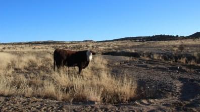 Ojito Wilderness Area - New Mexico