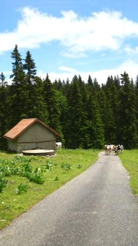 Abri au Pré aux Biches - Vaud - Suisse