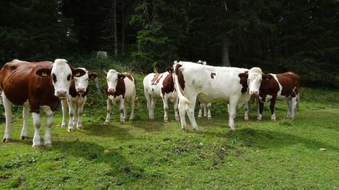 Non loin du Mondion - Bassins - Vaud - Suisse
