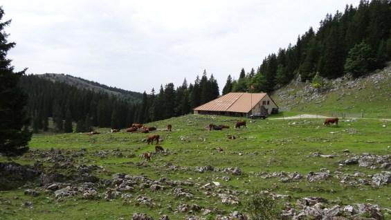 Le Croue - Vaud - Suisse
