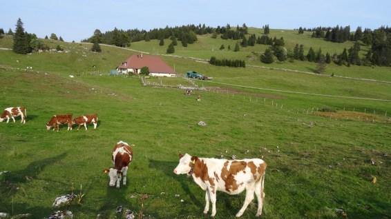 Pré de l'Haut Dessous - Vaud - Suisse