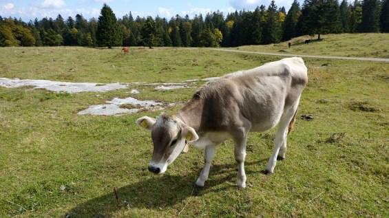 Petit Pré de Rolle - Longirod - Vaud - Suisse