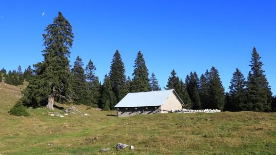 Couvert à proximité du Grand Cunay - Vaud - Suisse