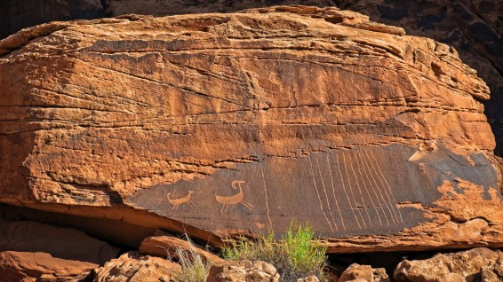 The Captive Goat Panel - Amasa Back Trail - Moab - Utah