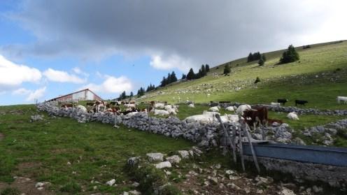Yens - Vaud - Suisse